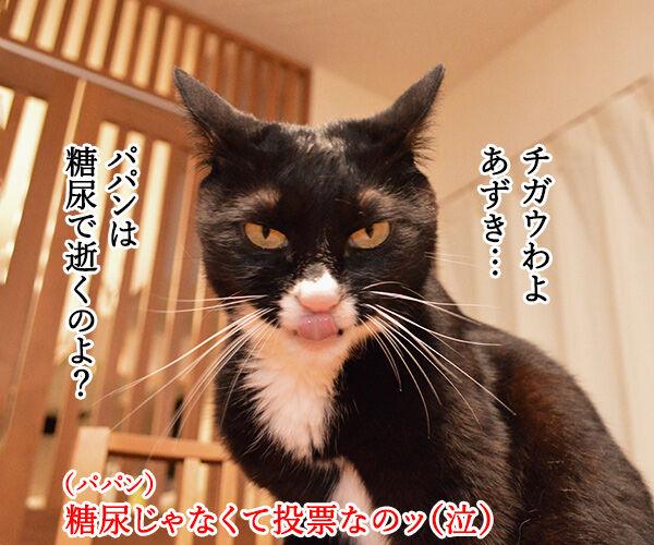 7月5日は投票に行くわよッ 猫の写真で4コマ漫画 3コマ目ッ