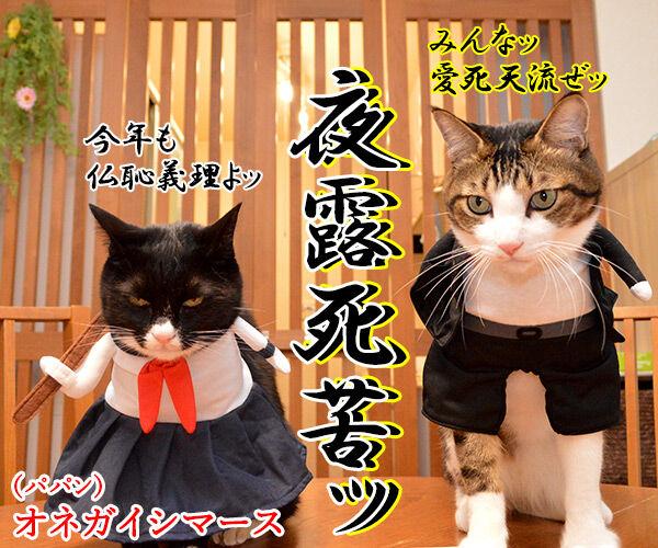 元旦だから新年のご挨拶なのッ 猫の写真で4コマ漫画 4コマ目ッ