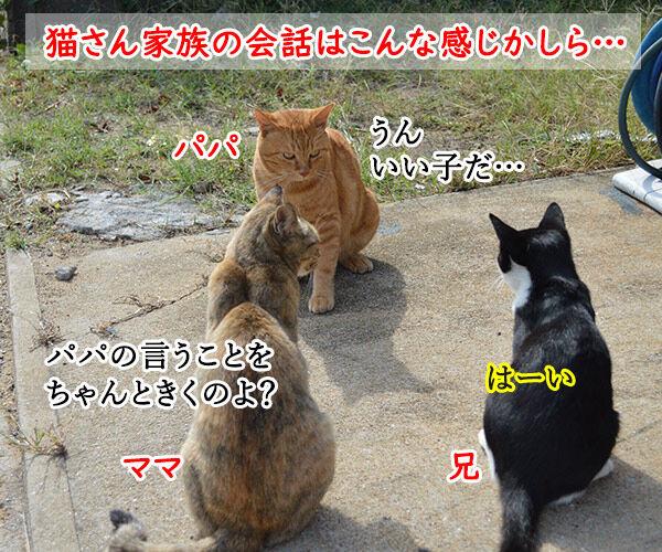 猫島 其の五 猫の写真で4コマ漫画 1コマ目ッ