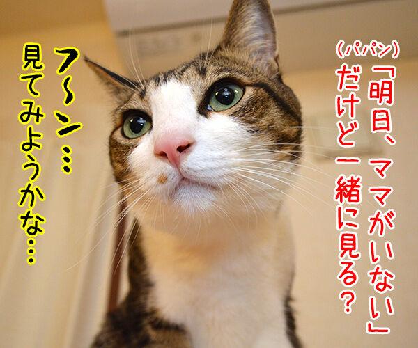 明日、ママがいない? 其の一 猫の写真で4コマ漫画 2コマ目ッ