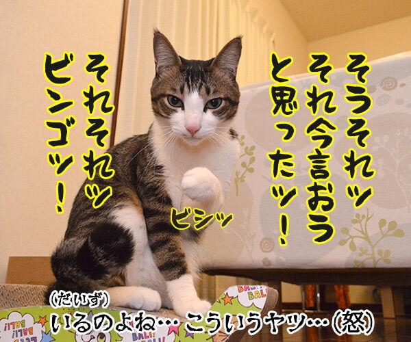 作戦会議 猫の写真で4コマ漫画 4コマ目ッ
