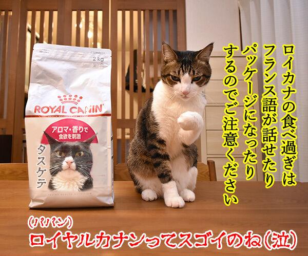 ロイヤルカナンは美味しいけど… 猫の写真で4コマ漫画 4コマ目ッ