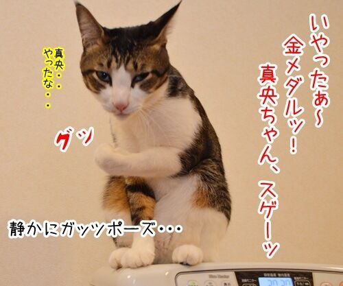 ソチの真央 其の一 猫の写真で4コマ漫画 4コマ目ッ