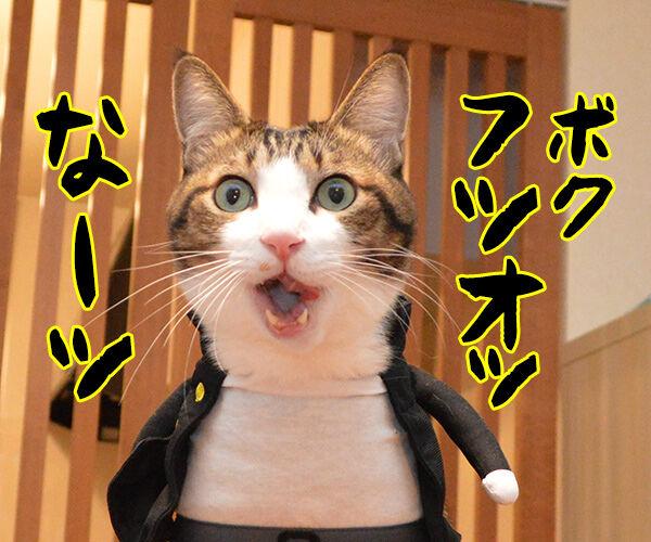 イモ欽トリオごっこするよーッ 猫の写真で4コマ漫画 2コマ目ッ