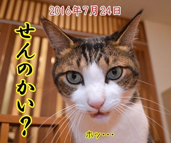 ドリルすんのかいせんのかい 猫の写真で4コマ漫画 3コマ目ッ