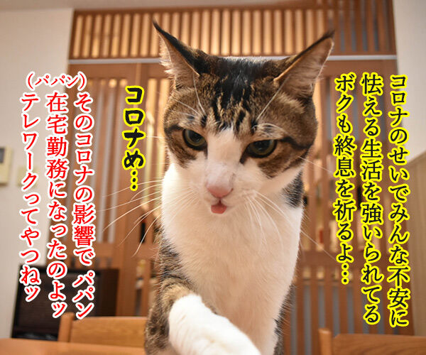 安心して生活できるように一日も早い終息を祈るわッ 猫の写真で4コマ漫画 2コマ目ッ