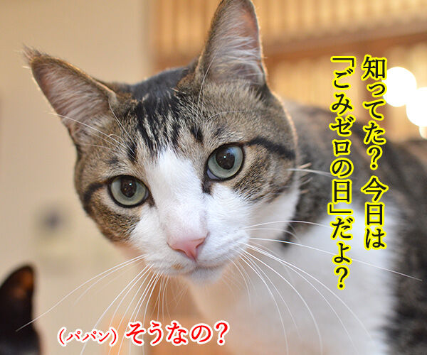きょうは、ごみゼロの日 猫の写真で4コマ漫画 1コマ目ッ