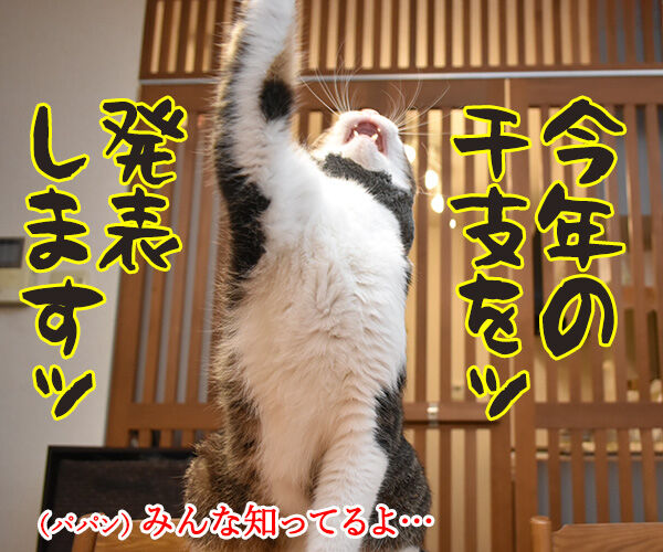 今年の干支を発表しますッ 猫の写真で4コマ漫画 1コマ目ッ