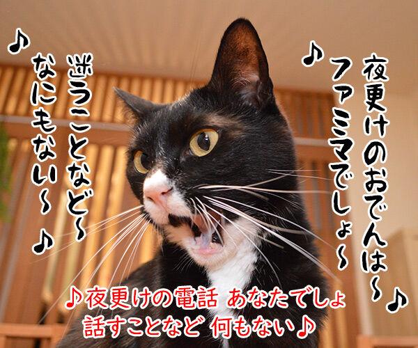 おでんのBGMといえばこの曲よねッ 猫の写真で4コマ漫画 3コマ目ッ