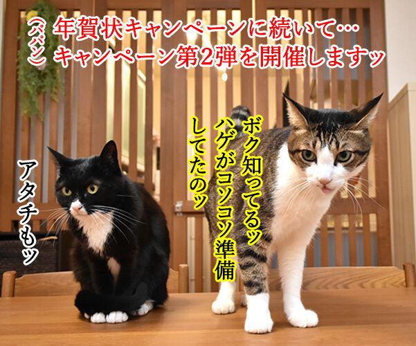 皆様に感謝の気持ちを込めて… キャンペーン第2弾なのよッ 猫の写真で4コマ漫画 1コマ目ッ