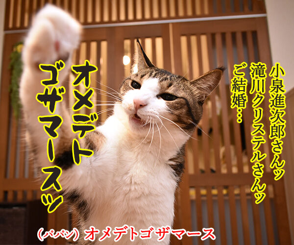 小泉進次郎さん 滝川クリステルさん ご結婚オメデトゴザマース 猫の写真で4コマ漫画 1コマ目ッ