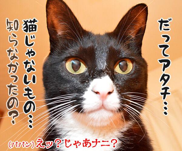 あずきさんとだいずさんは家族だから 猫の写真で4コマ漫画 4コマ目ッ