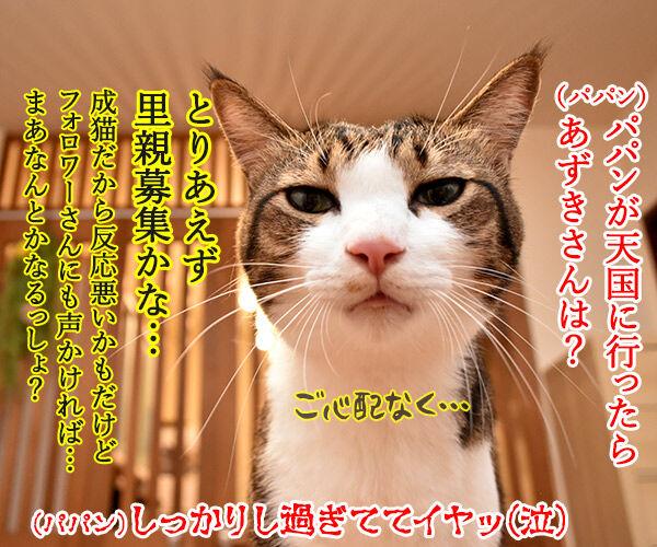 パパンが天国に行ったら 猫の写真で4コマ漫画 4コマ目ッ