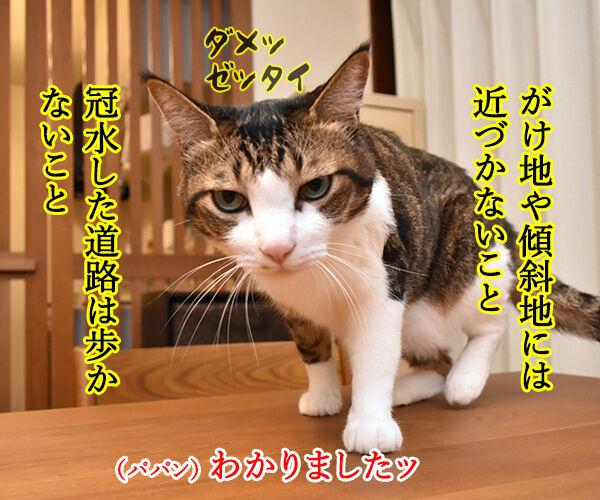 台風接近時にしてはいけないこと 猫の写真で4コマ漫画 2コマ目ッ
