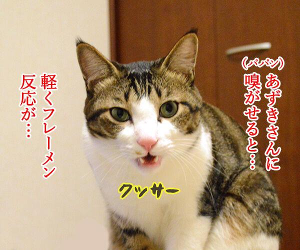 ちょっと実験してみたの 猫の写真で4コマ漫画 2コマ目ッ