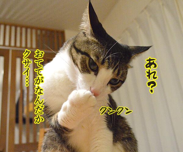 クサイ理由 猫の写真で4コマ漫画 1コマ目ッ