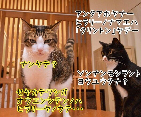 アメリカ大統領選挙 2016 猫の写真で4コマ漫画 4コマ目ッ