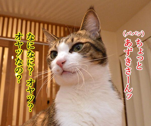 ちゃんと砂かけてよね 猫の写真で4コマ漫画 1コマ目ッ