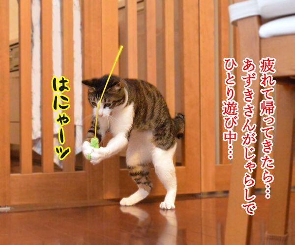 じゃらしのはなし 猫の写真で4コマ漫画 1コマ目ッ