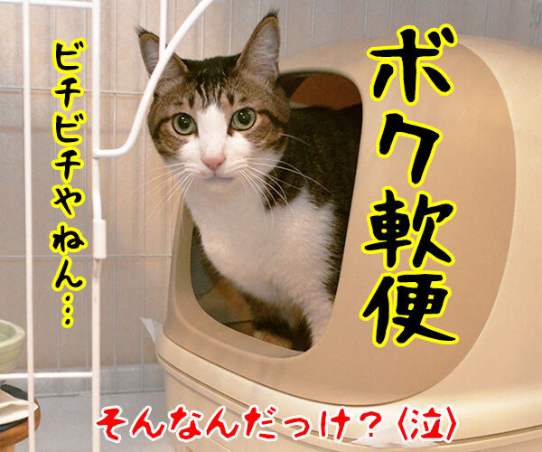狩野英孝がまたやらかしちゃったね 猫の写真で4コマ漫画 4コマ目ッ