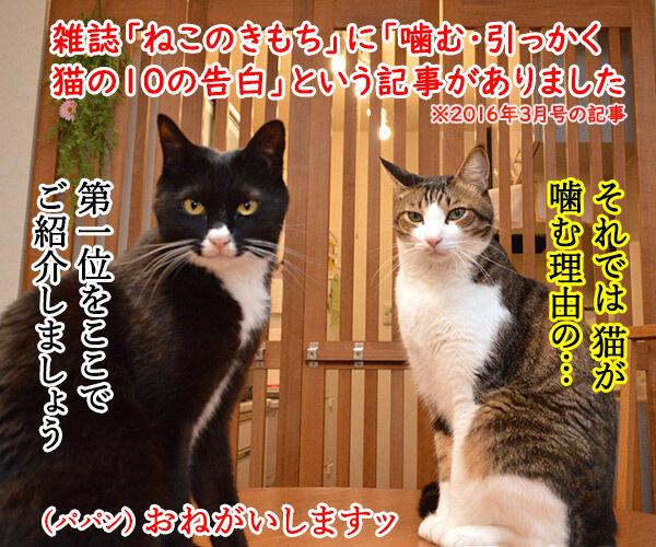 猫が噛む理由 猫の写真で4コマ漫画 1コマ目ッ