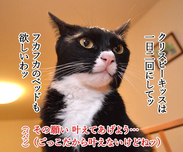 魔法のランプごっこがしたいのよッ 猫の写真で4コマ漫画 2コマ目ッ