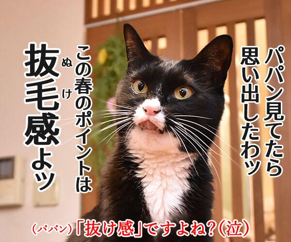 今年の春コーデのポイントは? 猫の写真で4コマ漫画 4コマ目ッ
