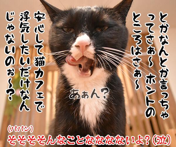 猫カフェでパルボウィルス感染して臨時休業なんですってッ 猫の写真で4コマ漫画 4コマ目ッ