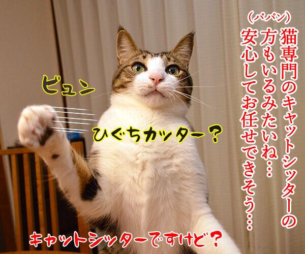 ペットシッターを頼もうかしら? 猫の写真で4コマ漫画 2コマ目ッ