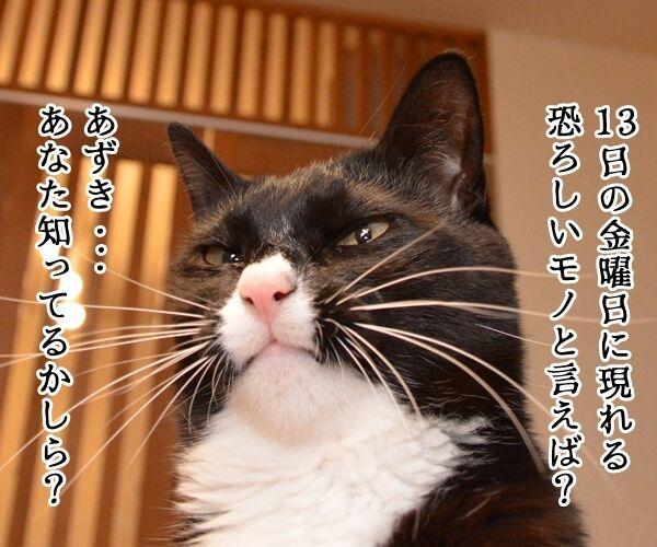 13日の金曜日に現れるのは? 猫の写真で4コマ漫画 1コマ目ッ