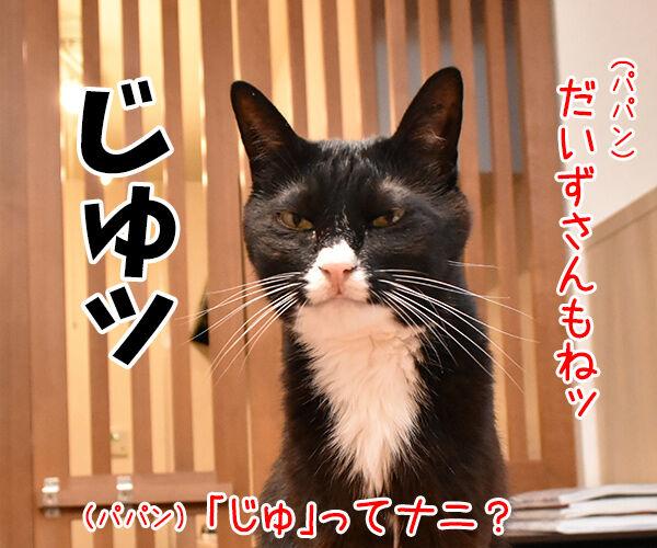 「はい」じゃなくて「りょ」じゃなくて 猫の写真で4コマ漫画 2コマ目ッ