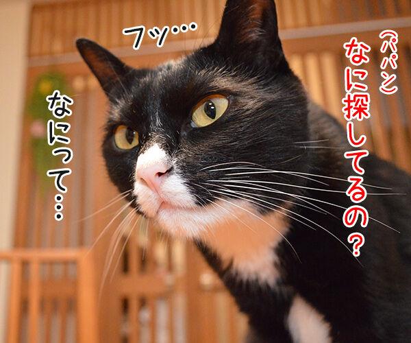さがしもの 猫の写真で4コマ漫画 3コマ目ッ