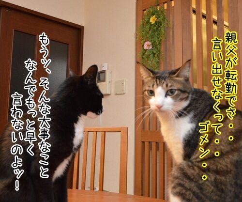 突然の別れ 猫の写真で4コマ漫画 2コマ目ッ