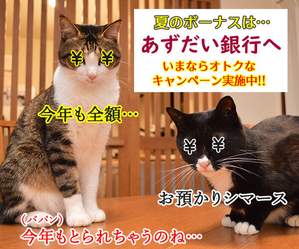 夏のボーナスキャンペーン開催中!! 猫の写真で4コマ漫画 2コマ目ッ