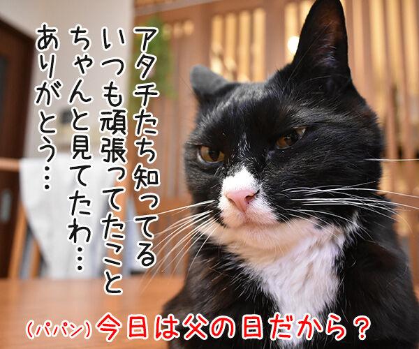 きょうは父の日だものッ 猫の写真で4コマ漫画 2コマ目ッ