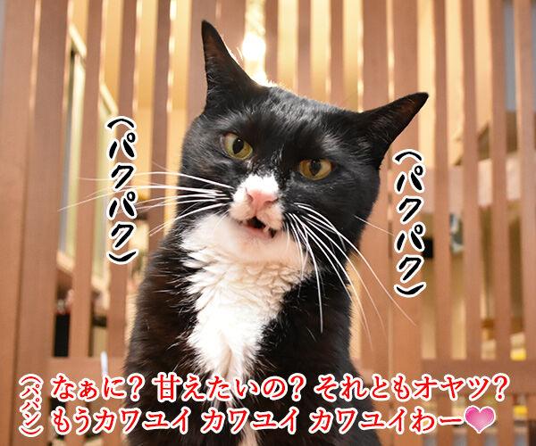 それはもしかしてサイレントニャー? 猫の写真で4コマ漫画 3コマ目ッ