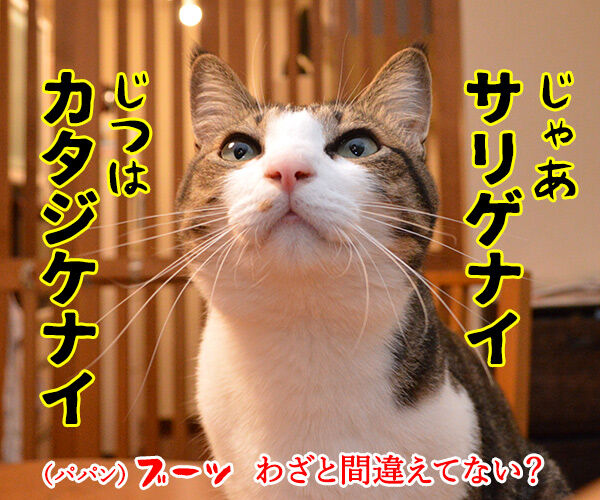 ドラゲナイ 猫の写真で4コマ漫画 3コマ目ッ