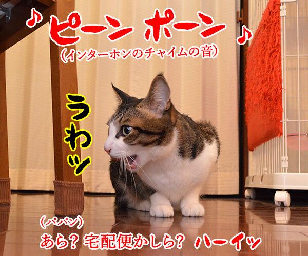 ビビリで人見知りなあずきさんは… 猫の写真で4コマ漫画 1コマ目ッ