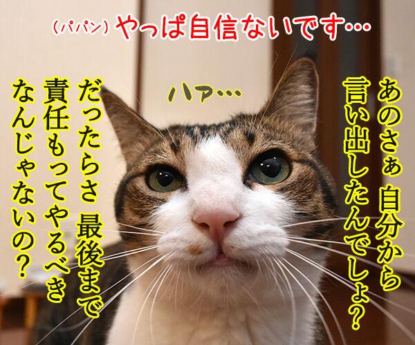 けっきょく… こうなる… 猫の写真で4コマ漫画 3コマ目ッ