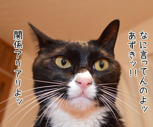 10月20日きょうは何の日? 猫の写真で4コマ漫画 3コマ目ッ