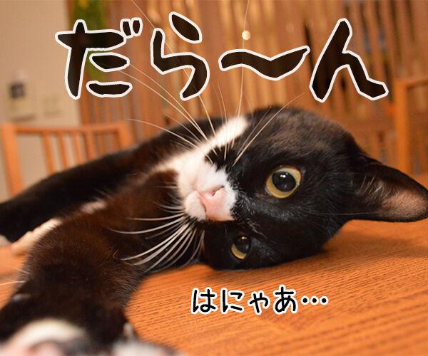 明日からお仕事 猫の写真で4コマ漫画 3コマ目ッ