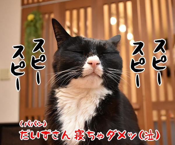 3月11日14時46分は みんなで黙祷を捧げるわよ 猫の写真で4コマ漫画 4コマ目ッ
