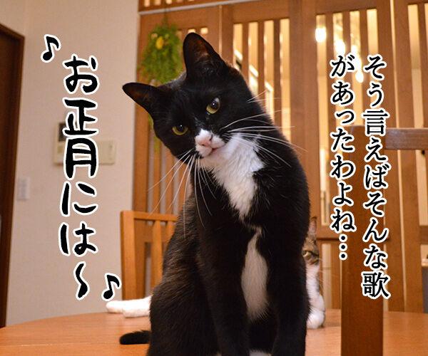 お正月にするコト 猫の写真で4コマ漫画 3コマ目ッ