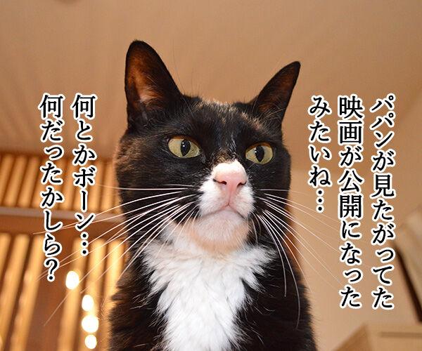 『ボーン』シリーズ最新作『ジェイソン・ボーン』が公開されたのよッ 猫の写真で4コマ漫画 1コマ目ッ