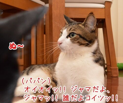パパラッチ 猫の写真で4コマ漫画 3コマ目ッ