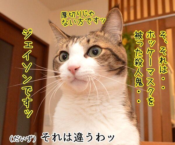 13日の金曜日に現れるのは? 猫の写真で4コマ漫画 2コマ目ッ