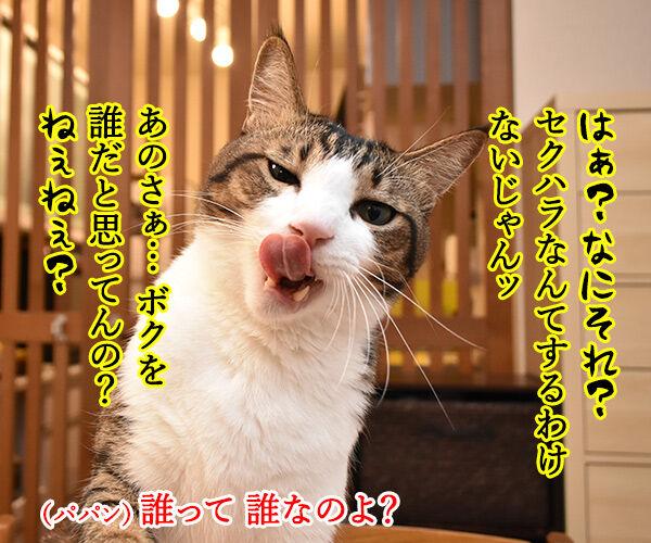 流行語大賞 ノミネート語 『#MeToo』 猫の写真で4コマ漫画 3コマ目ッ