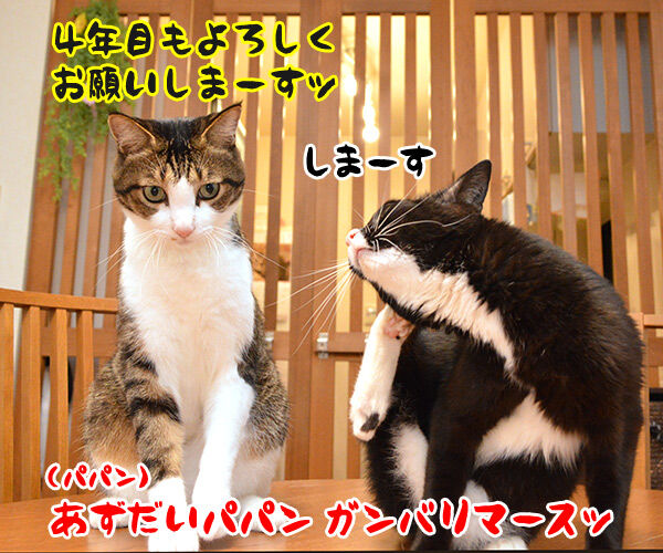 今日から4年目突入デースッ 猫の写真で4コマ漫画 5コマ目ッ