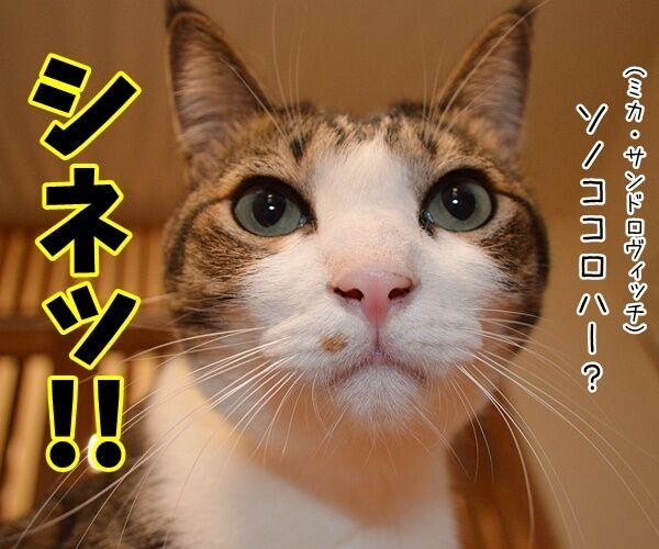 デッド・オア・アライヴのピート・バーンズさんが…… 猫の写真で4コマ漫画 3コマ目ッ