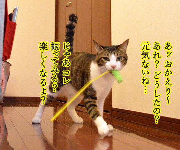 じゃらしのはなし 猫の写真で4コマ漫画 3コマ目ッ